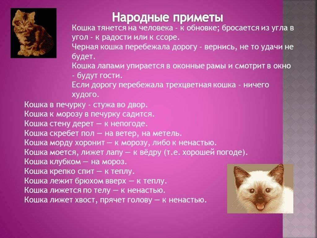 Чужая кошка на пороге дома — к счастью или неприятностям?