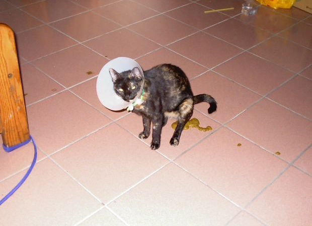Как мне удалось отучить кошку гадить в неположенном месте
