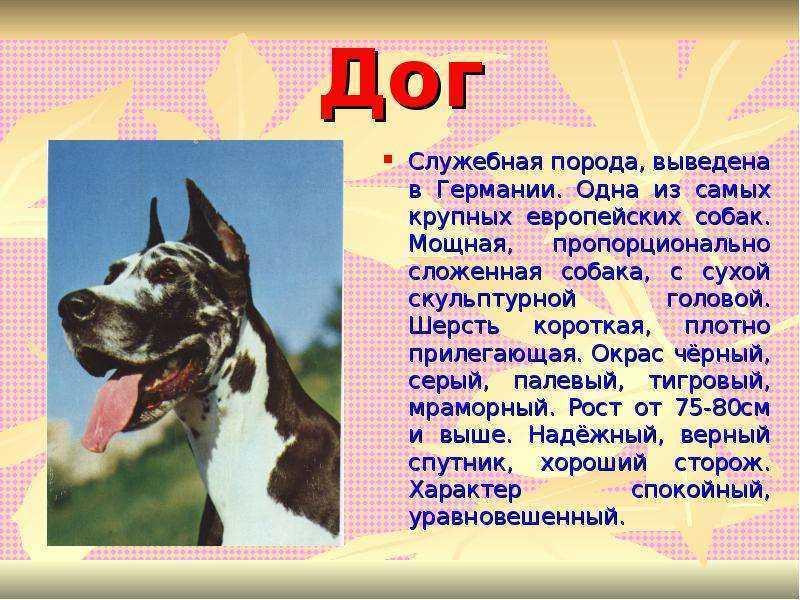 Виды собак. служебные, декоративные, охотничьи, ездовые. описание пород