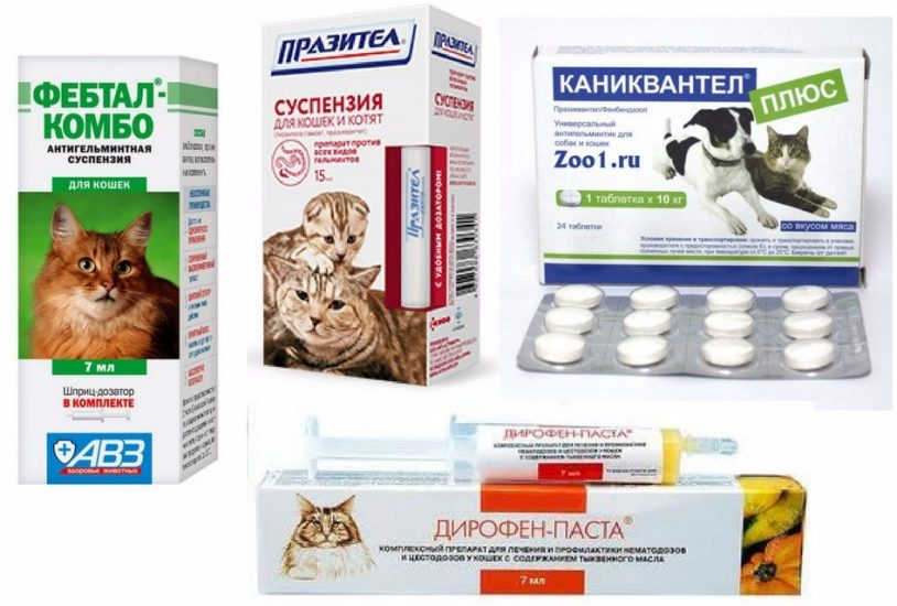 Глисты у беременной кошки: можно ли давать будущей маме таблетки от гельминтов