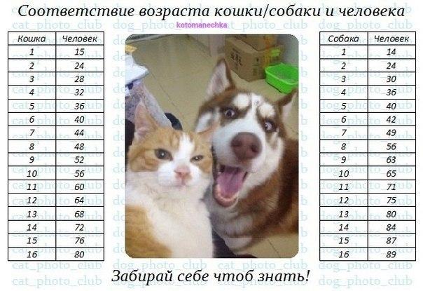 Сколько живут собаки породы шарпей?