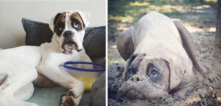 Почему собаки валяются в тухлятине и экскрементах других животных.
