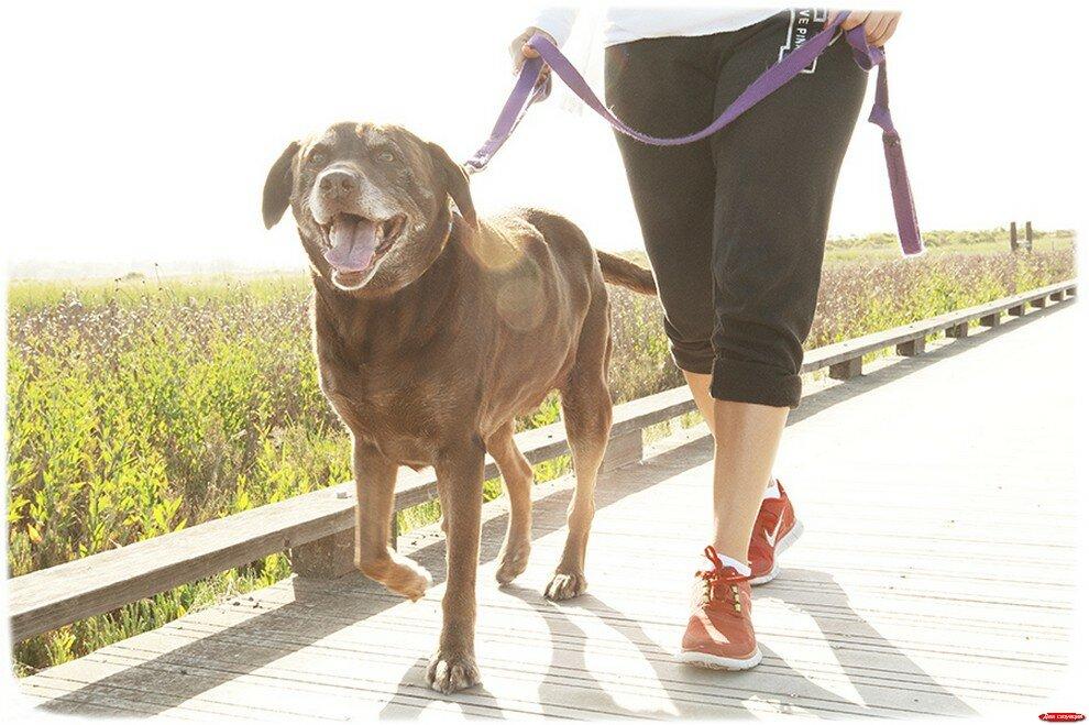 Сколько раз нужно гулять с собакой
