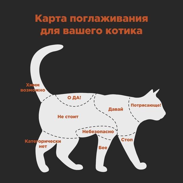 Почему кошки любят, когда их гладят: 3 причины, а также способы поглаживания усатых любимцев
