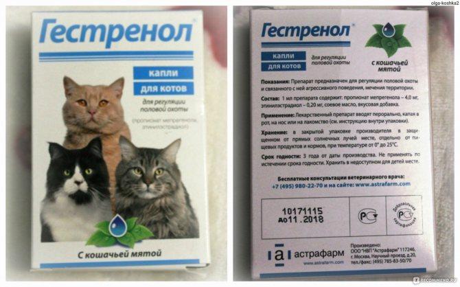 Успокоительное для кошек: в дорогу, в домашних условиях
