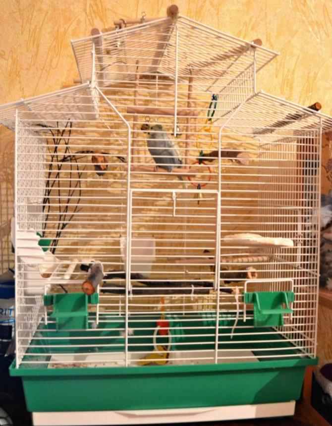 Выбор подходящих клеток для волнистых попугаев