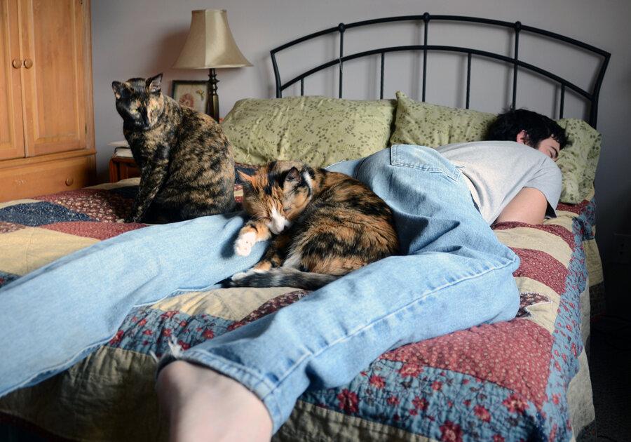 Как кошки проявляют любовь к хозяину?