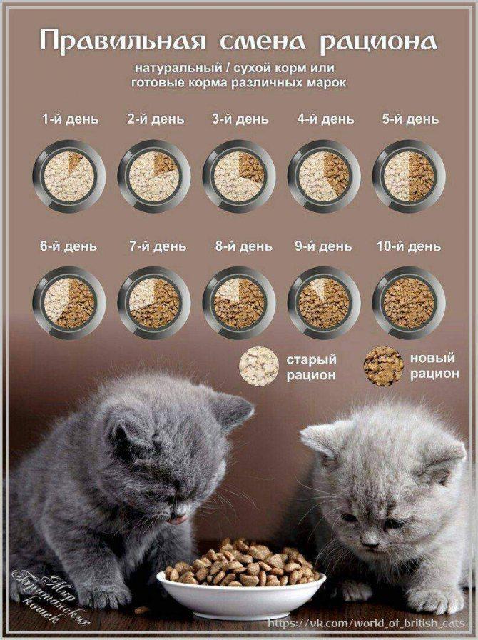 Как правильно кормить кошку: натуральное питание или промышленные корма