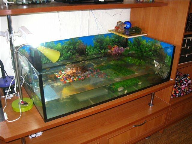 Какая вода нужна красноухой черепахе, сколько наливать в аквариум при содержании в домашних условиях