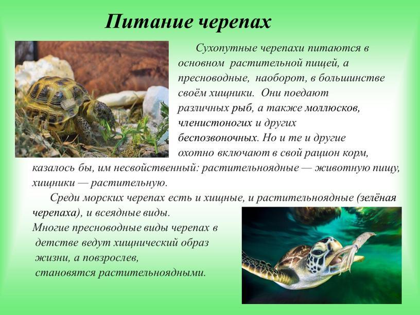 Что едят черепахи: как правильно и чем кормить черепаху в домашних условиях