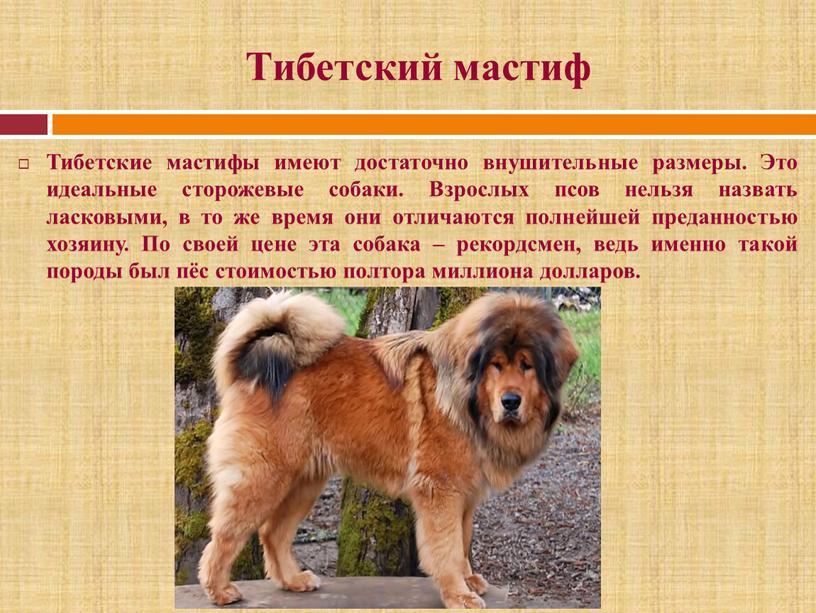 Тибетский мастиф: фото, описание породы собак и характер | фото