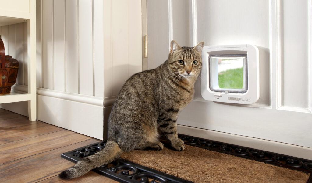Кошка – лучшая защита вашего дома от нечисти и дурного глаза, выберите свою
