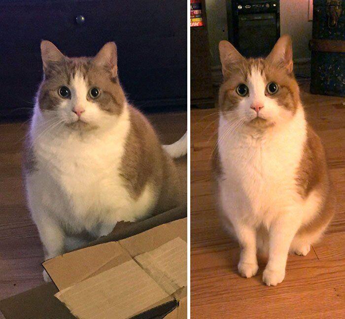 Кошка плохо и мало ест причины