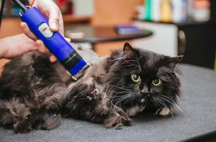 Как ухаживать за котом после стрижки