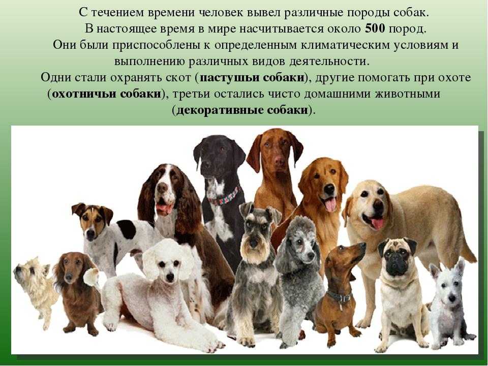 Сколько пород собак существует в мире число