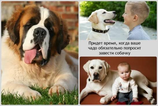 Лучшие породы собак для неопытных владельцев, топ-10 рейтинг пород