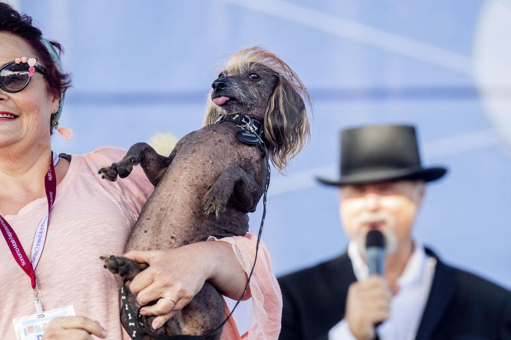 Самые глупые породы собак | fresher - лучшее из рунета за день