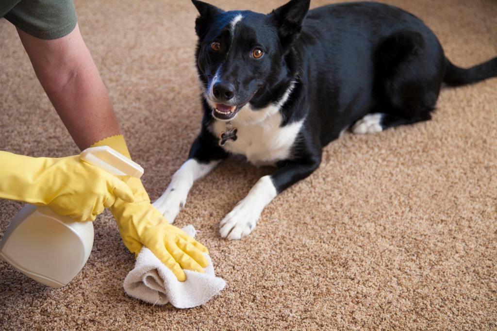 11 проверенных способов, как убрать запах собачьей мочи с дивана