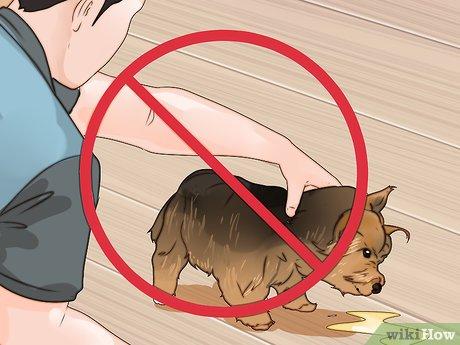 Можно ли наказывать собаку и как это правильно делать?
