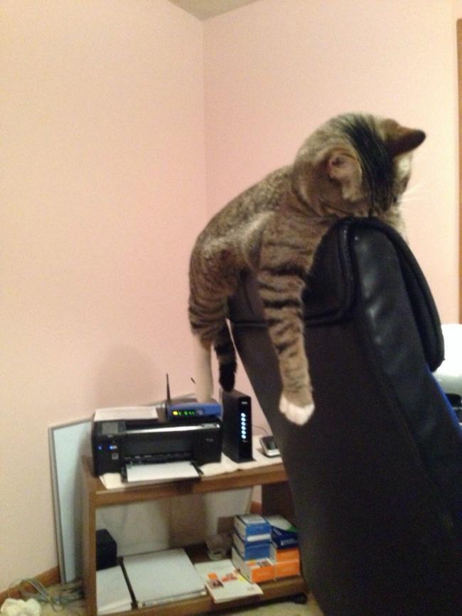 10 кошачьих привычек, от которых в восторге все хозяева - gafki.ru