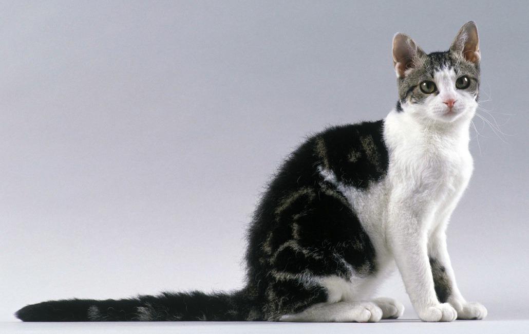 Белая кошка с зелеными глазами - фото и описание пород