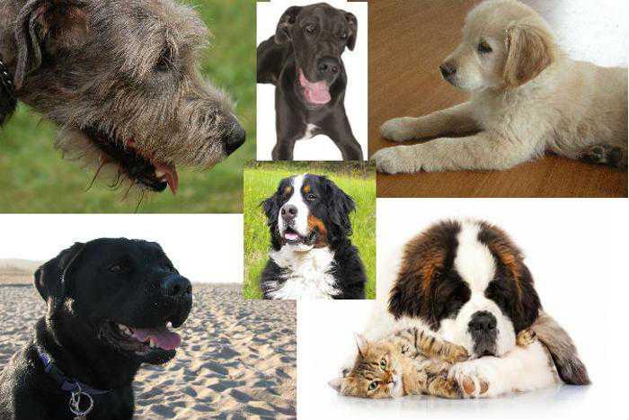 Как определить породу собаки по внешнему виду