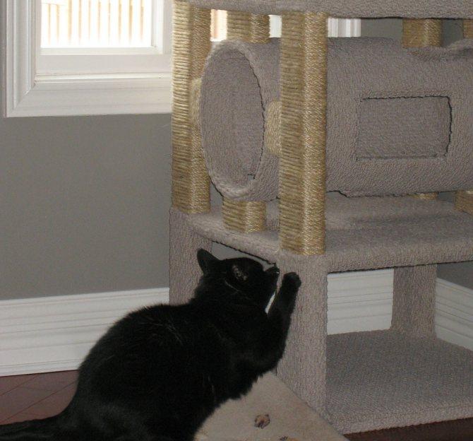Как отучить кота драть обои? причины и следствия
