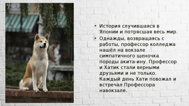 Акита-ину ???? фото, описание, характер, факты, плюсы, минусы собаки ✔