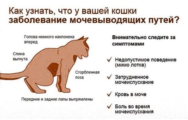 Кошку рвет после еды: что делать, опасные и неопасные причины, лечение и профилактика