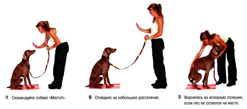 Как правильно ухаживать за щенком бигля