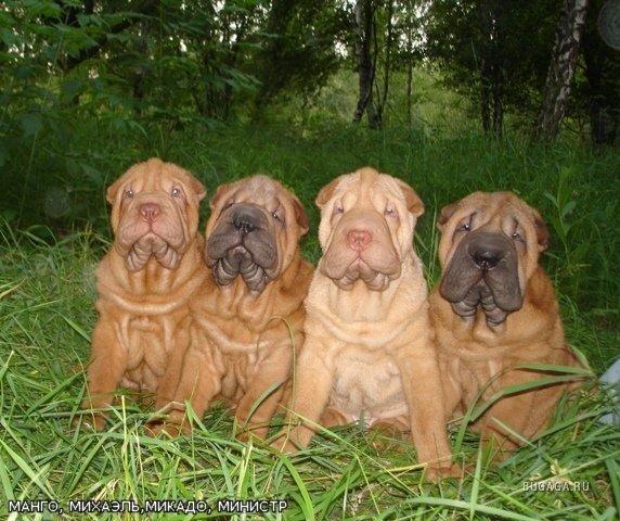 Продолжительность жизни собак   hill's