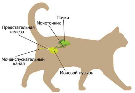 Это интересно: кошачий хвост - миркошек.рф