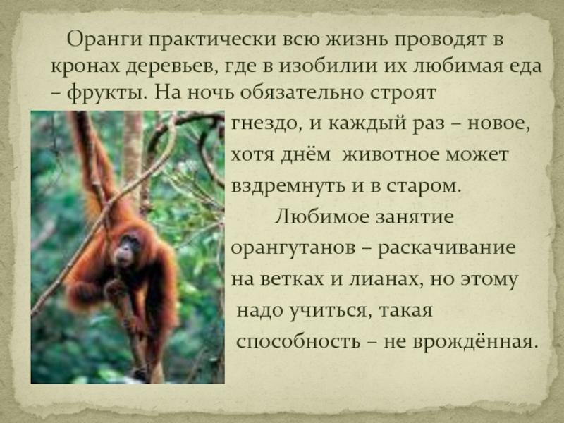 Виды обезьян, их особенности, описание и названия   живность.ру