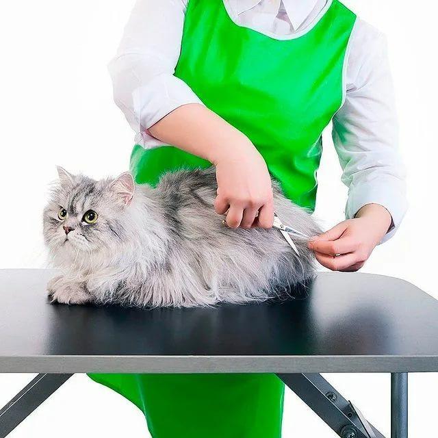 Груминг кошек: все о проведении процедуры и выбору инструментов, топ-100 фото красивых стрижек