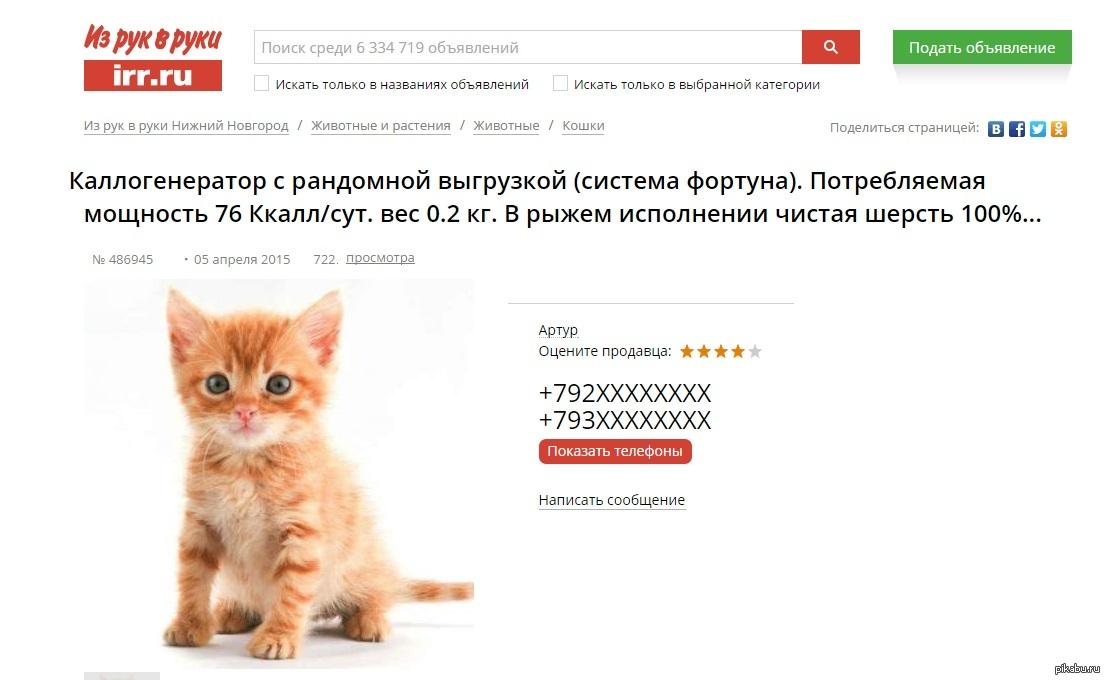 Как начать разводить кошек в домашних условиях: пошаговая инструкция организации бизнеса