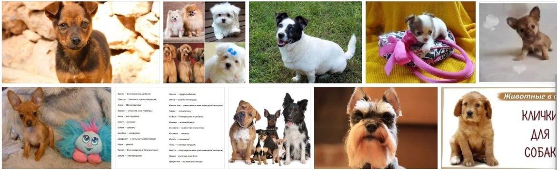 Как назвать собаку-девочку маленькой породы: особенности выбора клички