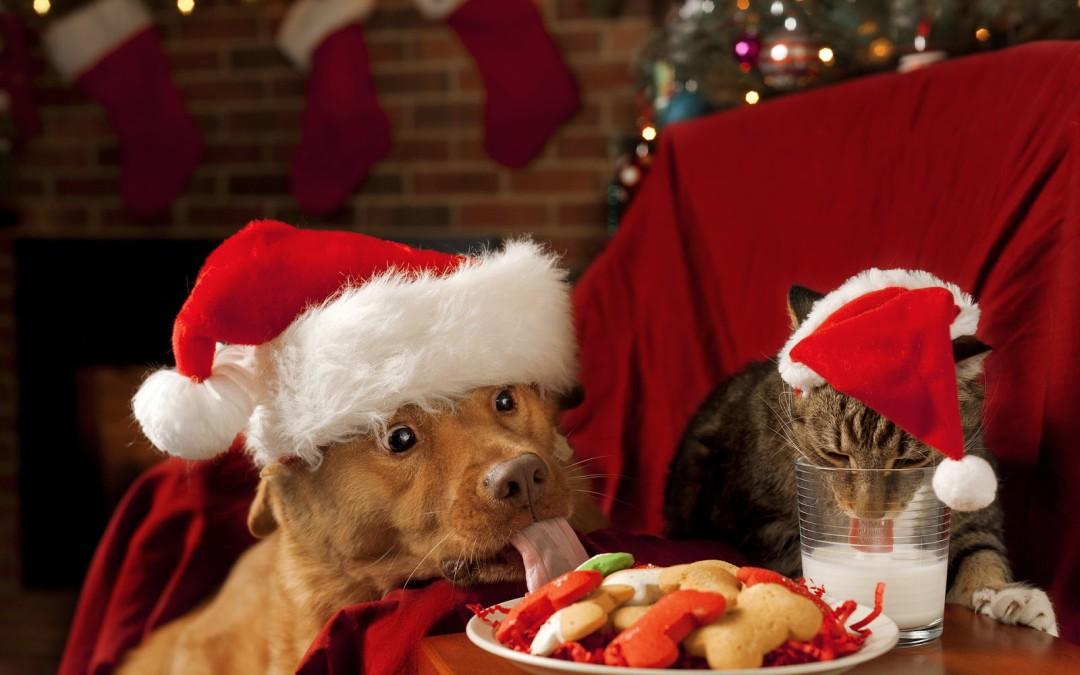 Кошка и собака в одном доме? как правильно познакомить