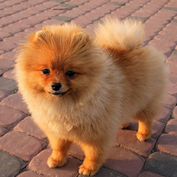 Все самые мелкие породы собак с фотографиями и названиями