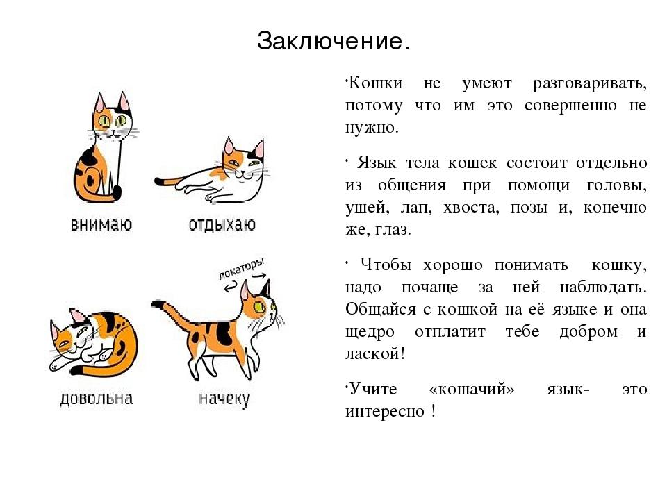 Переводчик с кошачьего на русский: что это, 13 основных жестов тела кошки, как распознать звуки