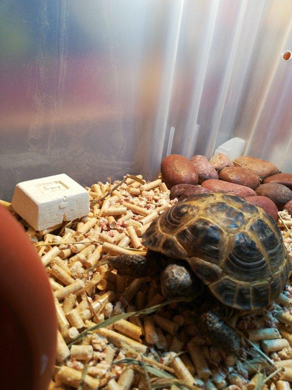 Чем кормить черепаху