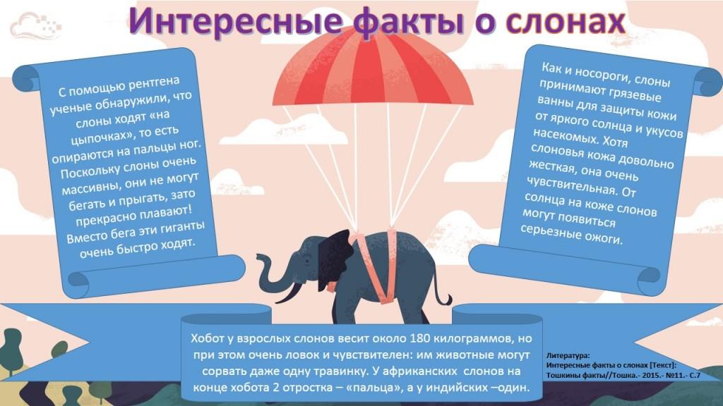 Слоны: что едят и где живут, вес и размеры, фото и интересные факты