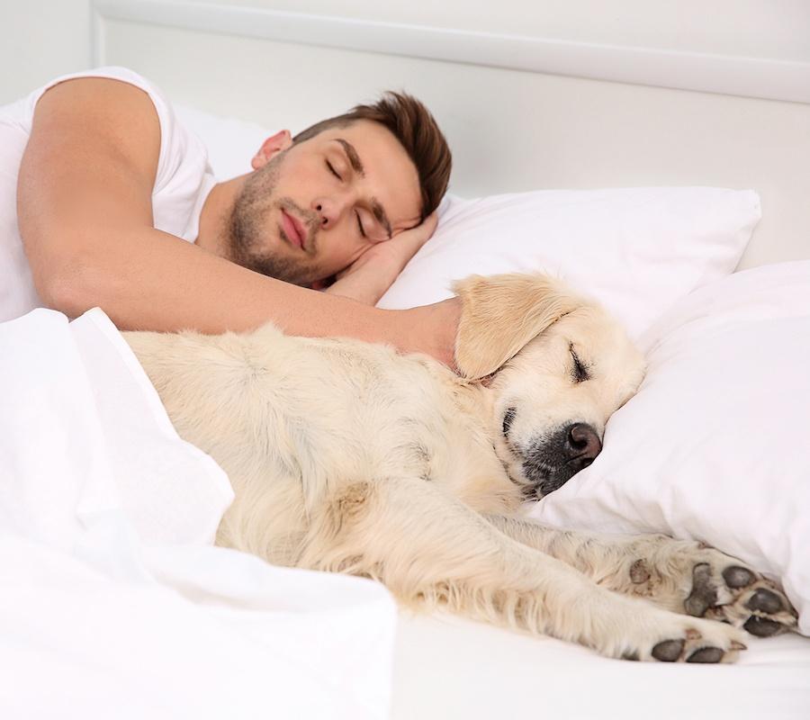 Как отучить собаку от привычки писать на кровать или диван