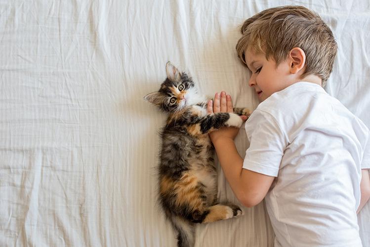 Выбираем питомца: кот или кошка? особенности полов - кого выбрать, кто лучше: мальчик или девочка
