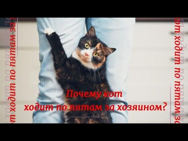 Почему кошка ложится на место, где спал хозяин, приметы об отдыхе котов