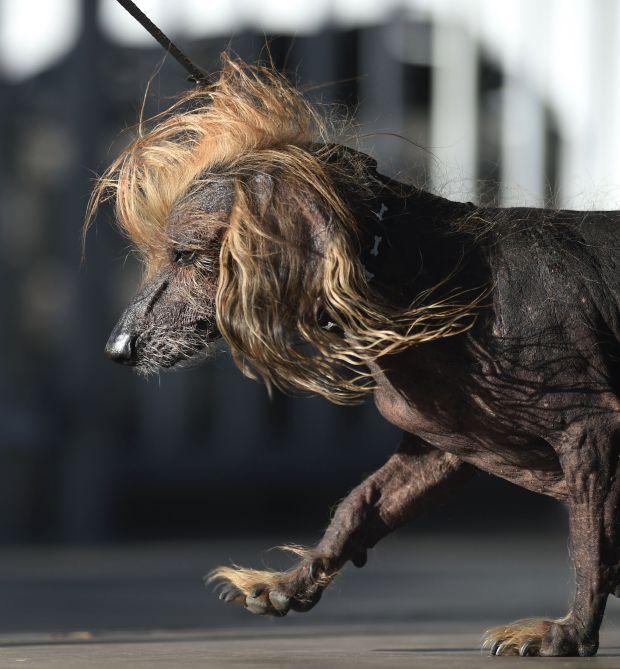 Какие породы собак считаются глупыми и почему
