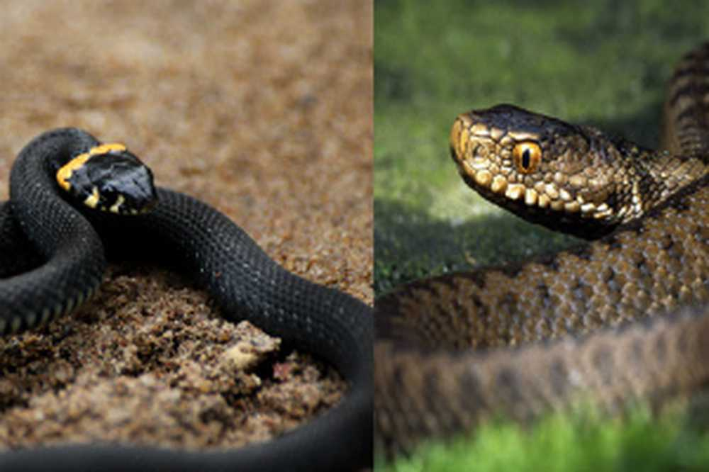Виды змей. описания, названия и особенности видов змей   животный мир