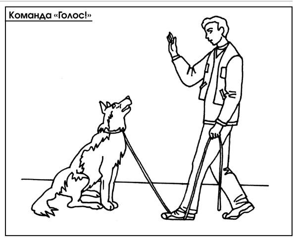 Как научить собаку команде сидеть и лежать