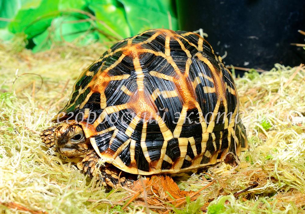 Сбитнева евгения михайловна. черепахи