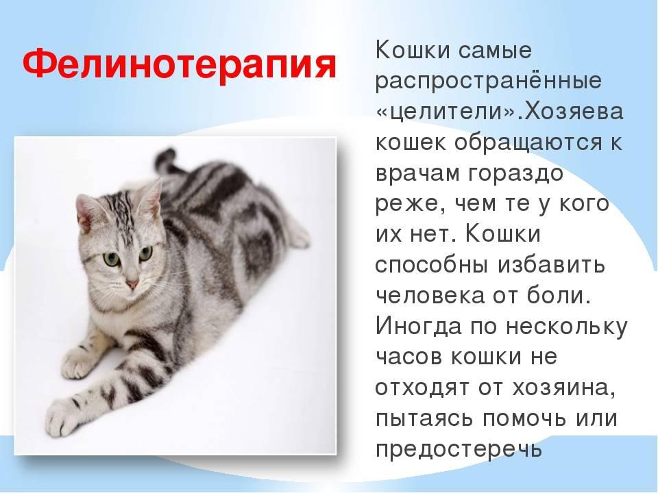 К чему в доме трехцветные кошки и что говорят о животных народные приметы