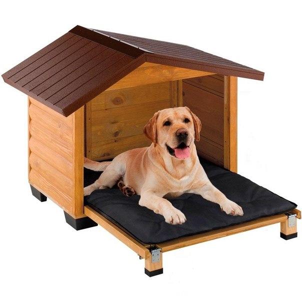 Что делать, если в доме собака, а вы хотите завести ещё одну?